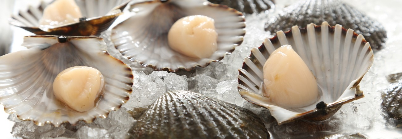 Bay Scallops in the Shell