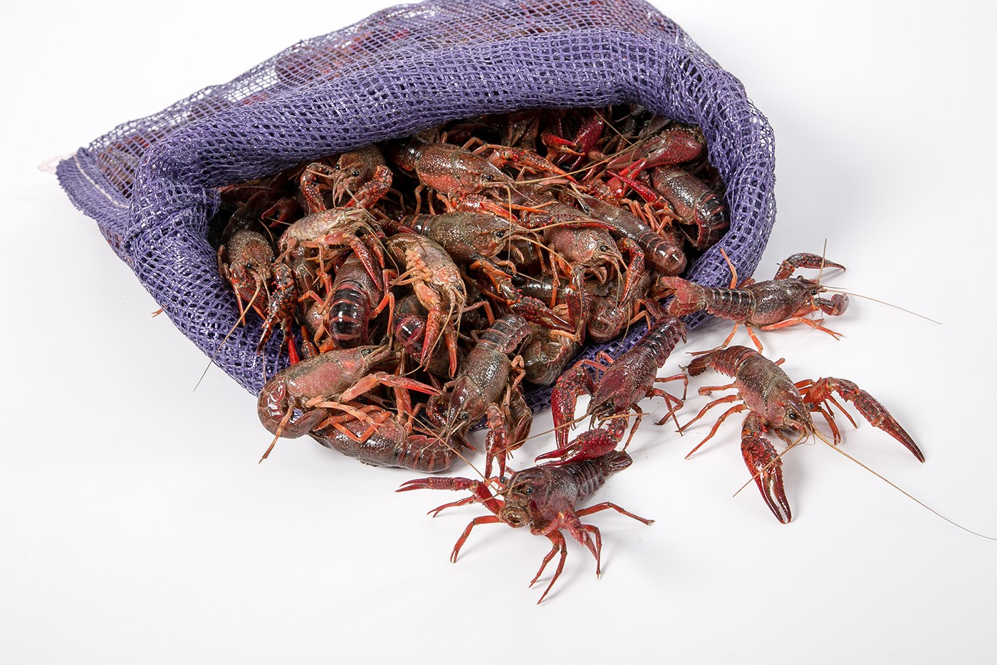 Wild Live Crayfish (Crawfish)