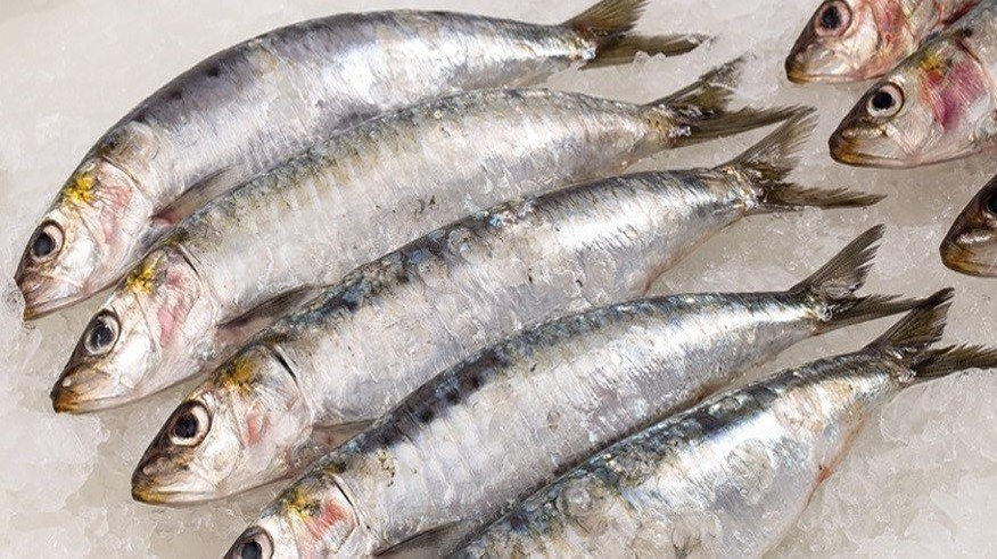 Imported Sardine Fish, Whole   Citarella