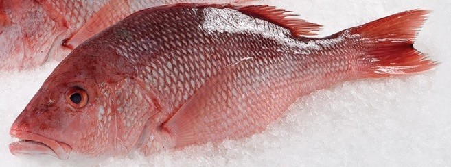 wild whole red snapper buy fresh fish citarella