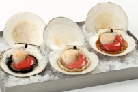 Wild Sea Scallops in the Shell