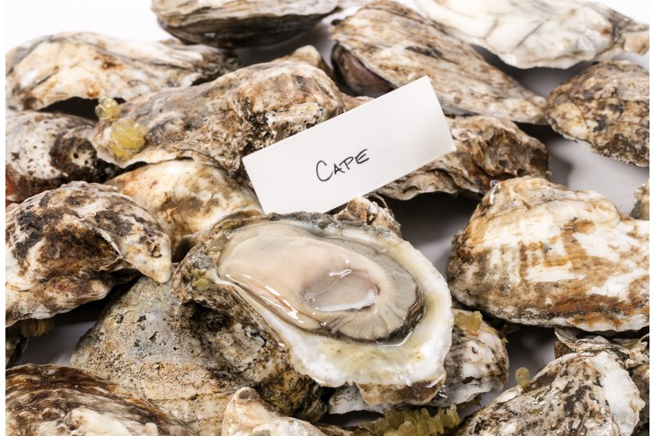 Wild Cape Oysters (Blue Point)