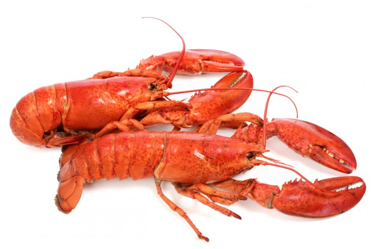 Wild Large Steamed Lobsters