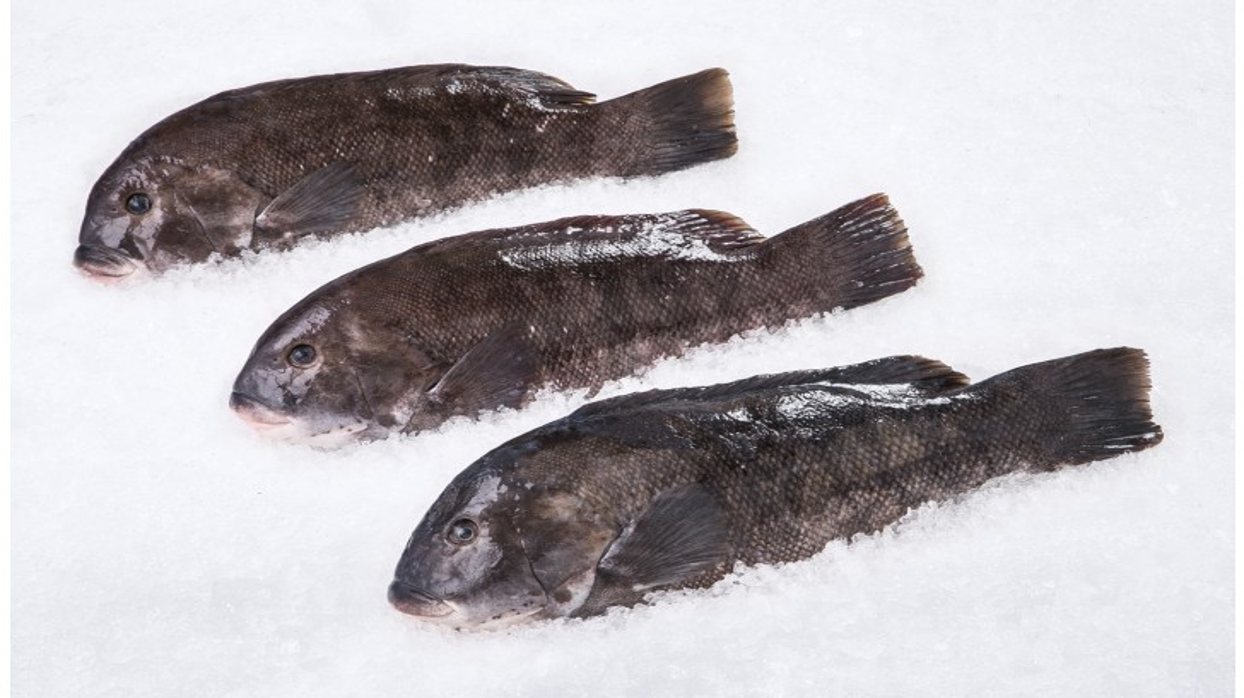 Wild Blackfish Whole