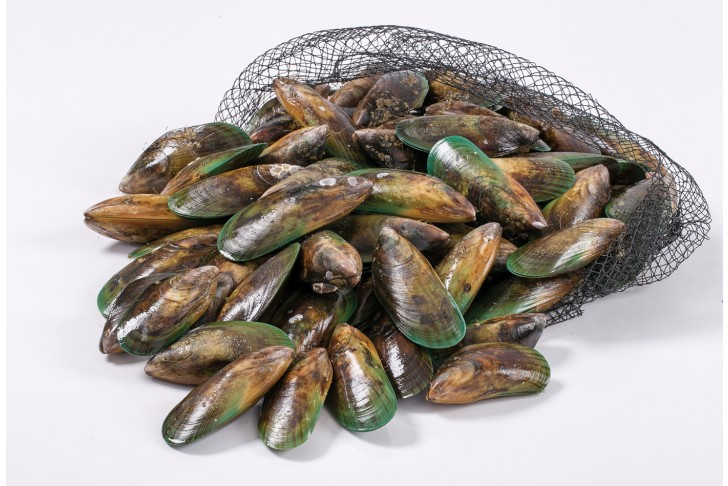 Wild New Zealand Mussels