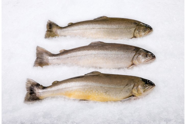 Arctic Charr Whole