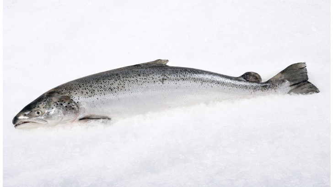 Scottish Salmon Whole