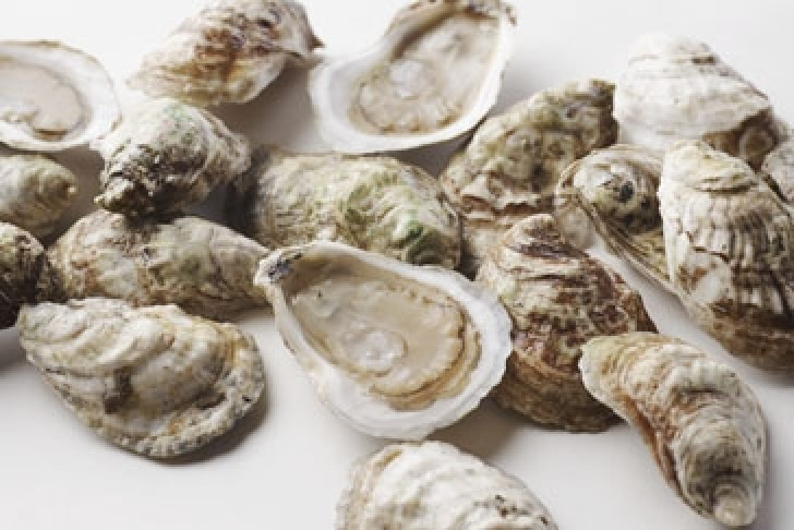 Peconic Oysters