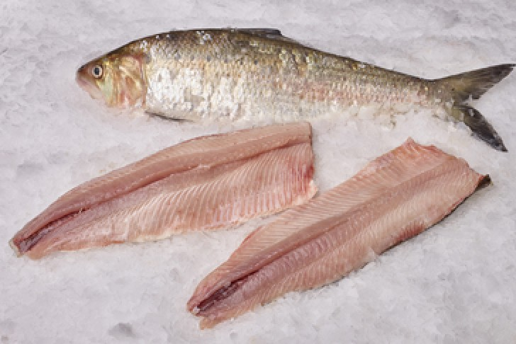 Wild Boned Shad Fillet